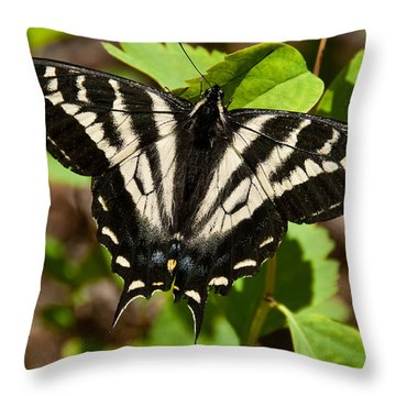Throw Pillow featuring the photograph Tiger Swallowtail Butterfly by Jeff Goulden