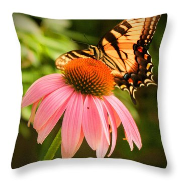 Tiger Swallowtail Feeding Throw Pillow