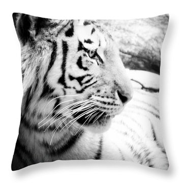 Throw Pillow featuring the photograph Tiger Watch by Erika Weber