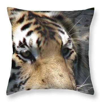 Tiger Water Throw Pillow by Greg Patzer
