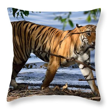Tigress Along The Banks Throw Pillow by Fotosas Photography