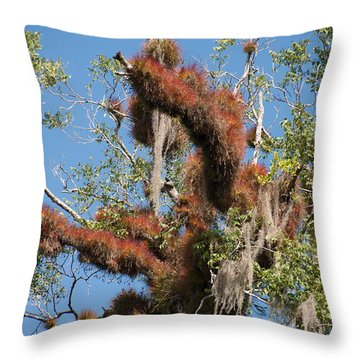 Tikal Furry Tree Closeup Throw Pillow