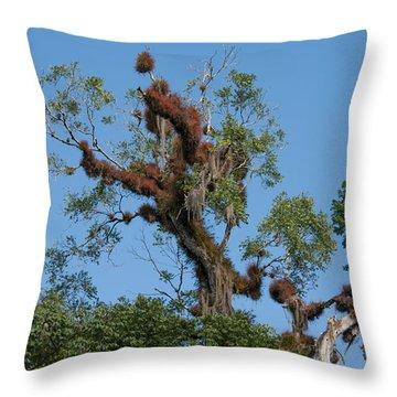 Tikal Furry Tree Throw Pillow