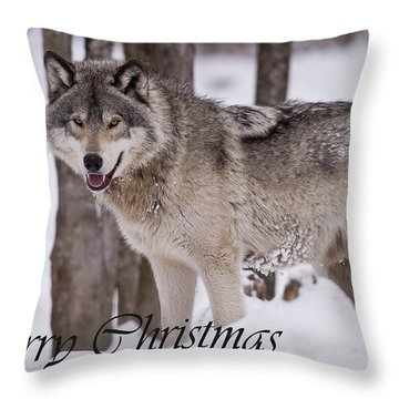 Timber Wolf Christmas Card English 3 Throw Pillow
