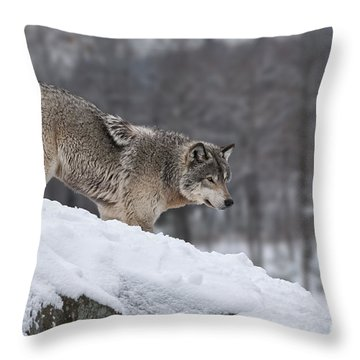 Timber Wolf On Hill Throw Pillow