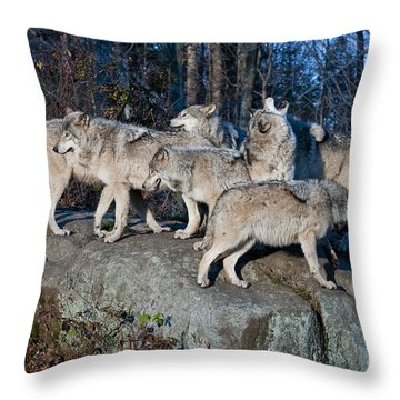 Timber Wolf Pack Throw Pillow