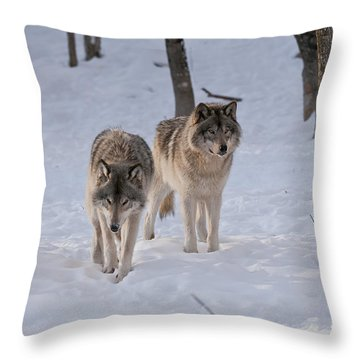 Throw Pillow featuring the photograph Timber Wolf Pair  by Wolves Only