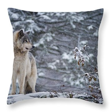Timber Wolf Pictures 189 Throw Pillow