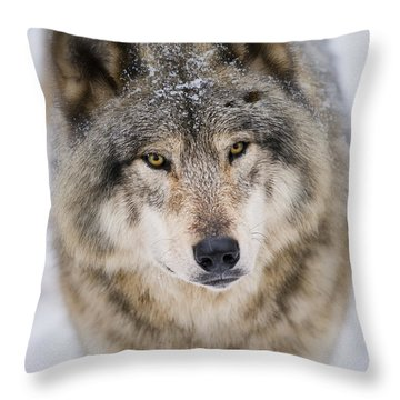 Timber Wolf Pictures 254 Throw Pillow