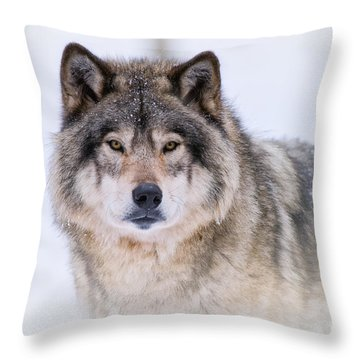 Timber Wolf Pictures 256 Throw Pillow