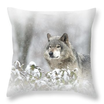 Timber Wolf Pictures 279 Throw Pillow