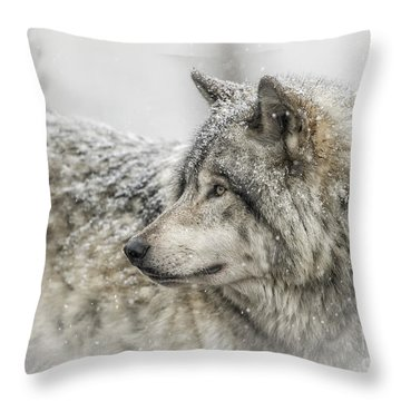 Timber Wolf Pictures 280 Throw Pillow