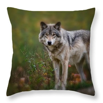 Timber Wolf Pictures 401 Throw Pillow