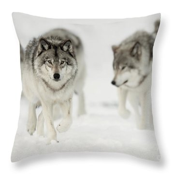 Timber Wolf Pictures 65 Throw Pillow