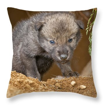 Timber Wolf Pictures 782 Throw Pillow by World Wildlife Photography