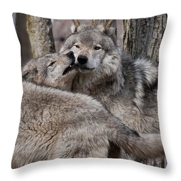 Throw Pillow featuring the photograph Timber Wolves Playing by Wolves Only