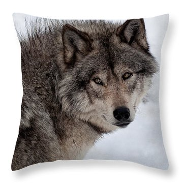 Throw Pillow featuring the photograph Timberwolf At Rest by Bianca Nadeau