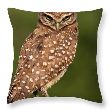 Tiny Burrowing Owl Throw Pillow