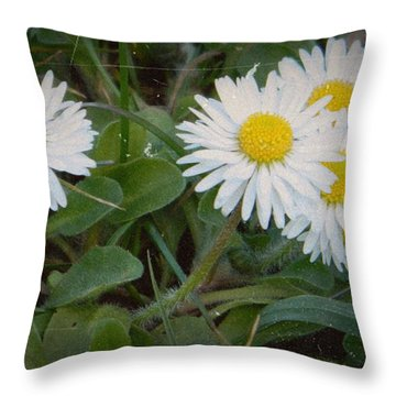 Tiny Daisies Throw Pillow by Chalet Roome-Rigdon