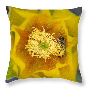 Tiny Dark Bee Covered In Prickly Pear Pollen Throw Pillow