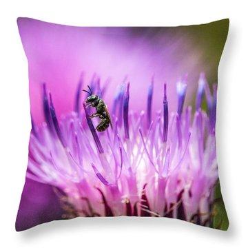 Tiny Dark Bee On Texas Thistle Throw Pillow
