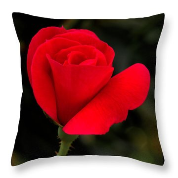 Tiny Knockout Throw Pillow by Dave Bosse