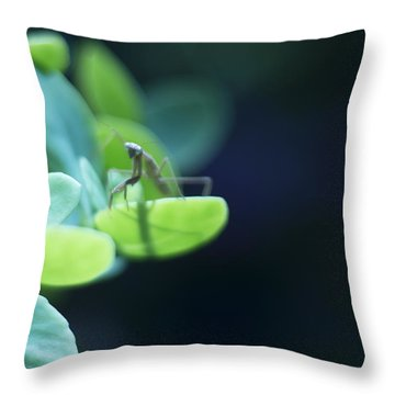 Throw Pillow featuring the photograph Tiny Praying Mantis On Sedum by Rebecca Sherman