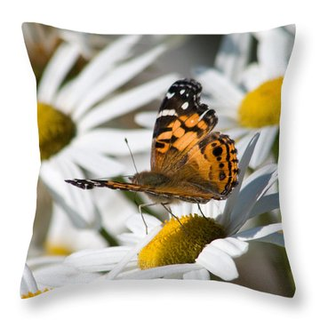 Throw Pillow featuring the photograph Tip-toeing On Daisies by Greg Graham