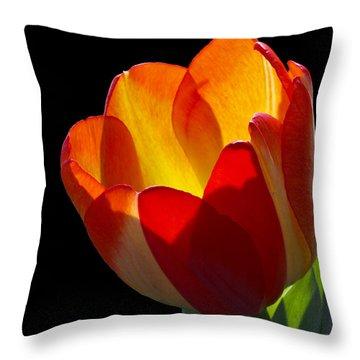 Tippy Throw Pillow by Doug Norkum
