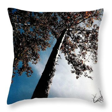 Throw Pillow featuring the photograph Tippy Top Tree Photo by Lesa Fine