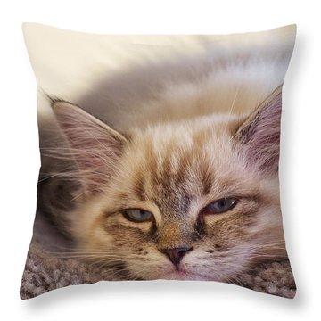 Tired Kitten Throw Pillow