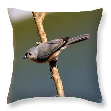 Throw Pillow featuring the photograph Titmouse by Lisa L Silva
