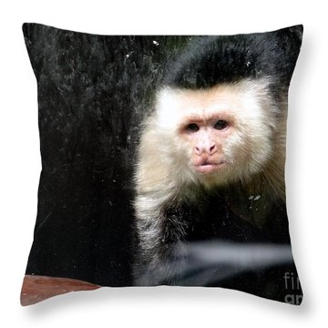 Tito In Window Throw Pillow by Ed Weidman