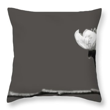to Kiss the Sun Throw Pillow by Lisa Knechtel