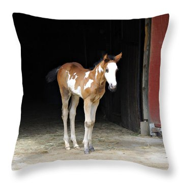 Toccoa At The Barn Throw Pillow by Kenny Francis