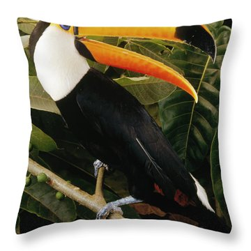 Toco Toucan Ramphastos Toco Calling Throw Pillow by Claus Meyer
