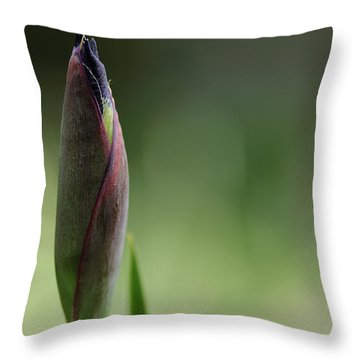 Today A Bud - Purple Iris Throw Pillow by Debbie Oppermann