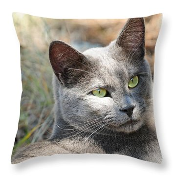 Throw Pillow featuring the photograph Tom Cat by Susie Rieple