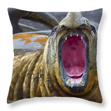 Tonsils And Trunks Throw Pillow by Tony Beck