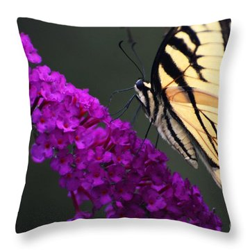 Too Close For Comfort Throw Pillow by Judy Wolinsky
