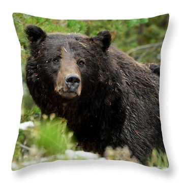 Throw Pillow featuring the photograph Too Close For Comfort by Yeates Photography