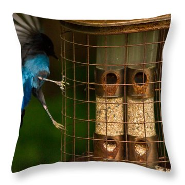 Too Small For A Stellar Jay Throw Pillow by Eti Reid