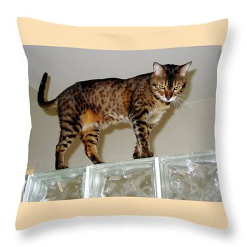 Throw Pillow featuring the photograph Tora On Glass II by Phyllis Kaltenbach