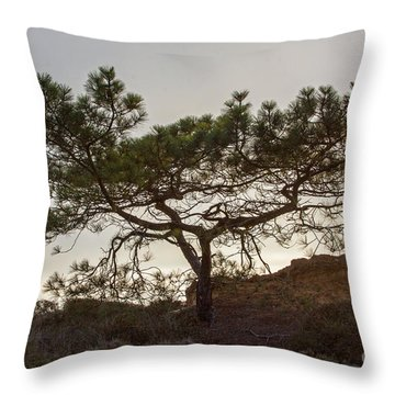 Torrey Pine Tree Throw Pillow by Darleen Stry