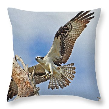 Touch Down - Osprey In Flight Throw Pillow