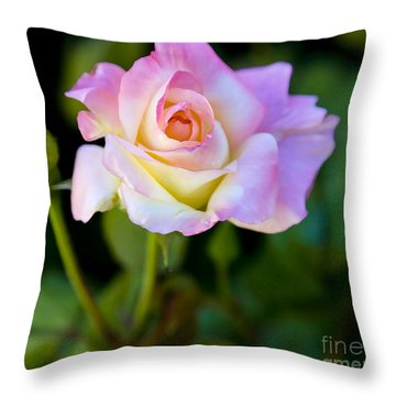 Rose-touch Me Softly Throw Pillow by David Millenheft
