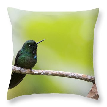 Tourmaline Sunangel Hummingbird Throw Pillow