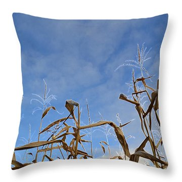 Throw Pillow featuring the photograph Towering Corn  by Lyle Crump