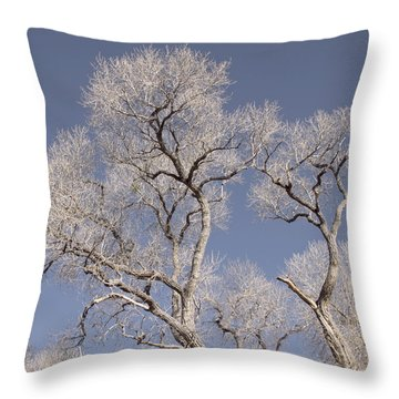 Towering Cottonwoods Throw Pillow by Elvira Butler
