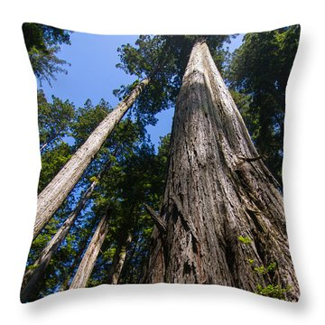 Towering Redwoods Throw Pillow